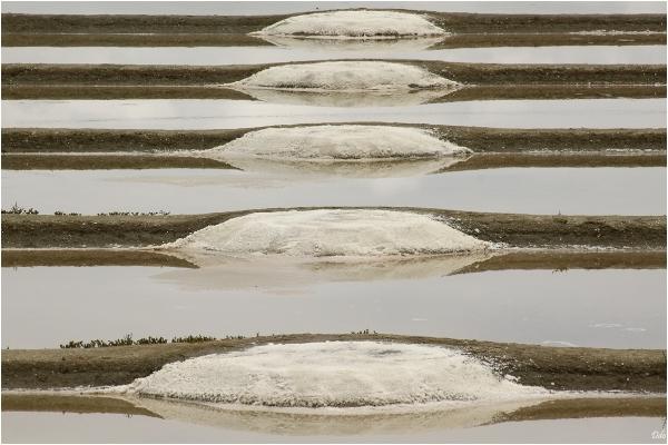 Terre de sel (3)