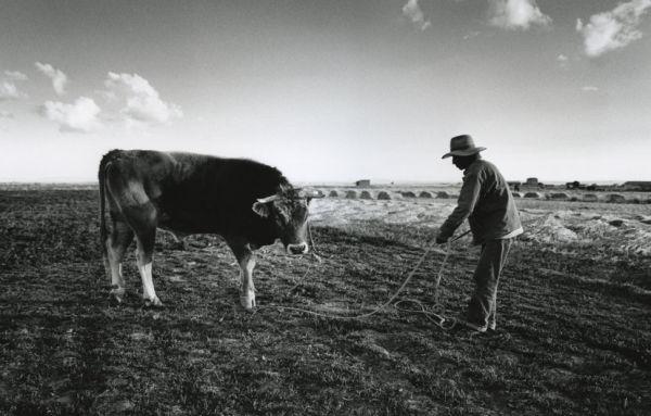Daniel and bull