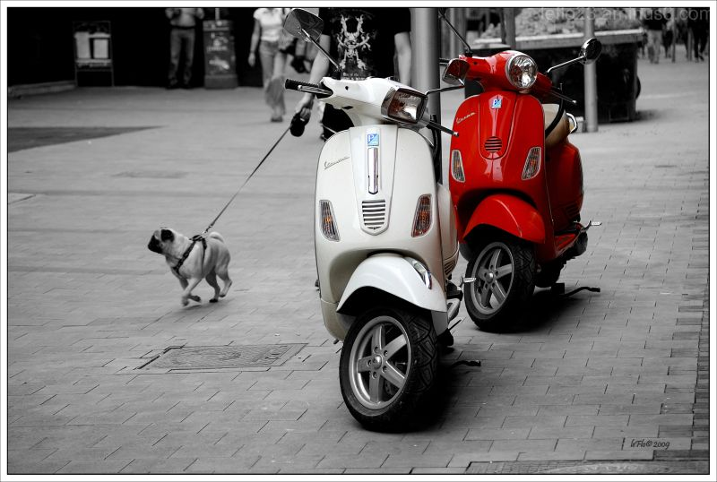 Two Vespas and a Pug