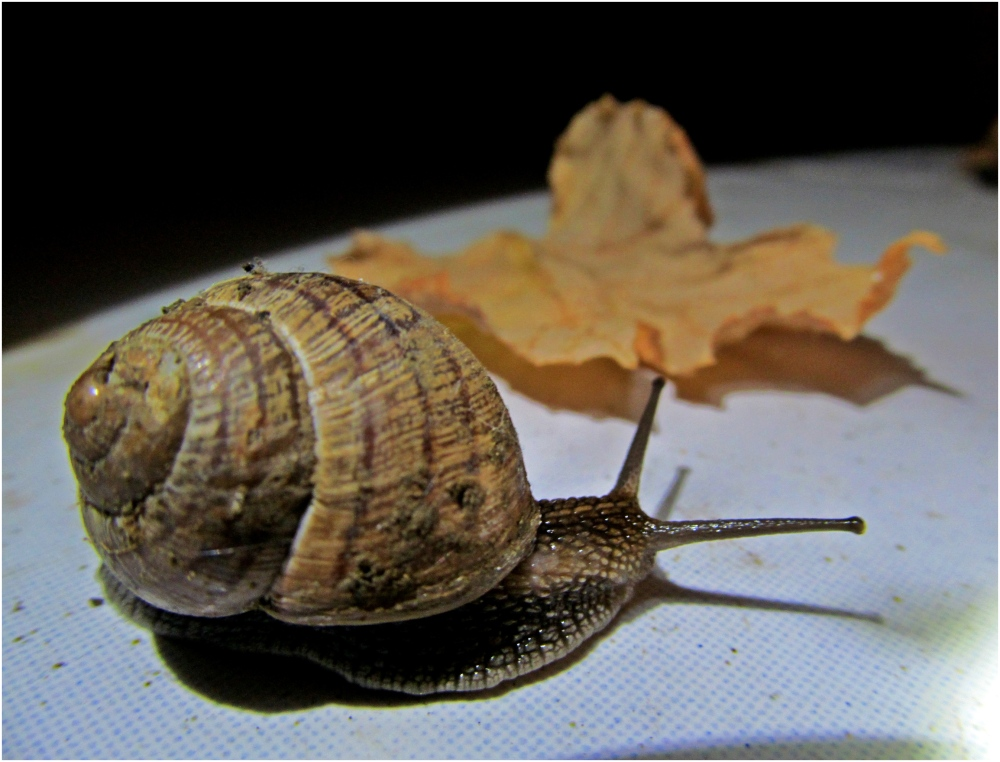 snail is going