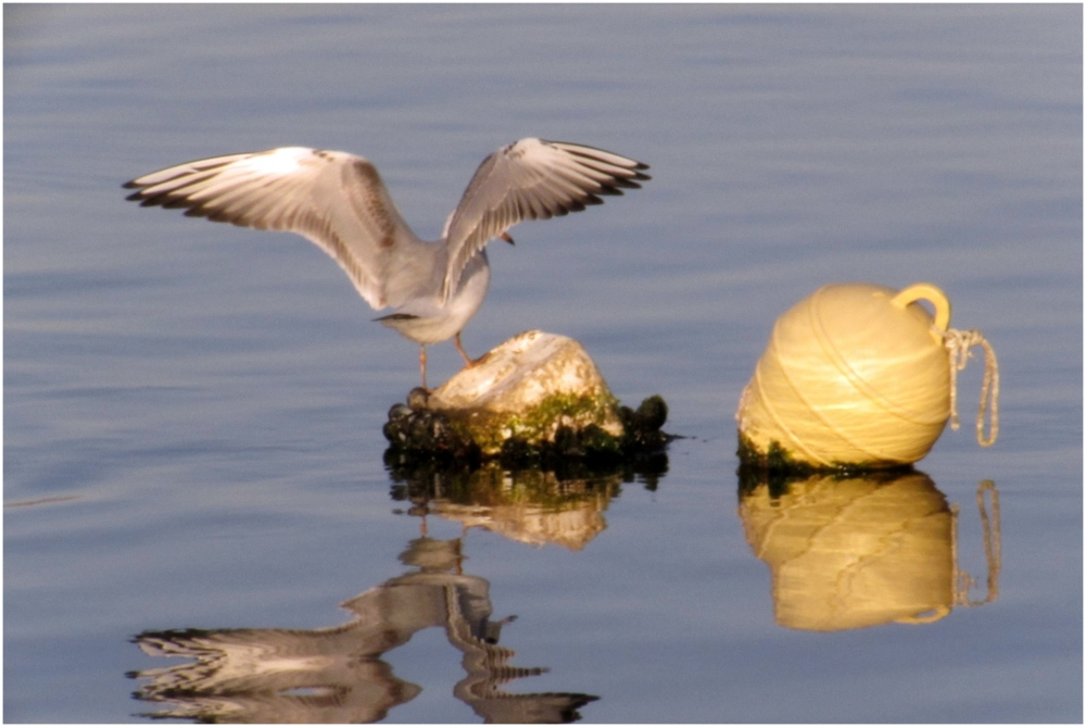 gull and reflection on the sea