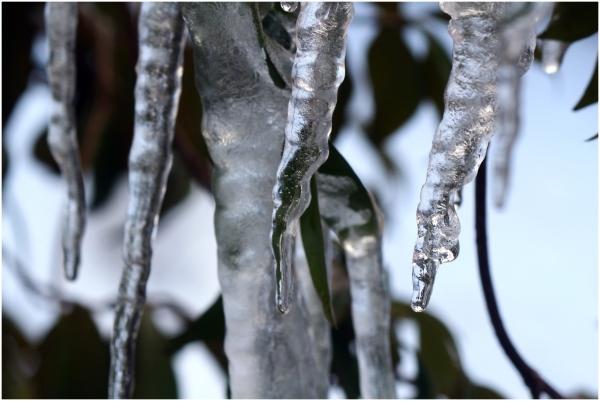 icy fingers