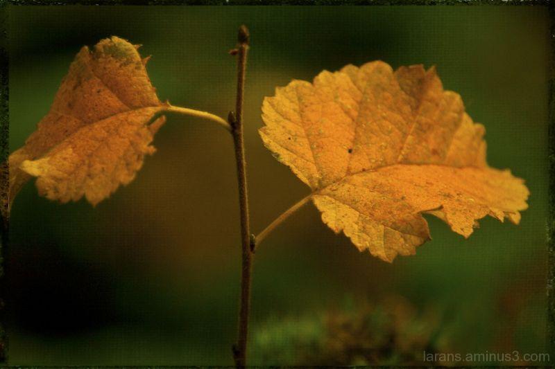 ...autumn leaves...