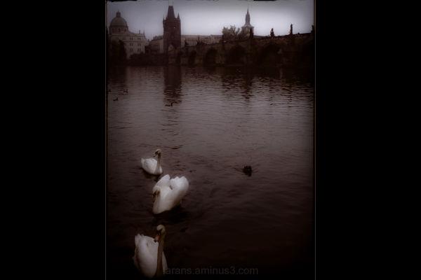 The Prague Fragments XX - ...the last ones...