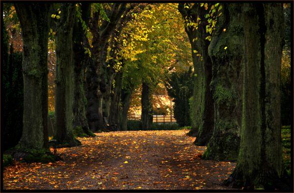 ...autumn alley...