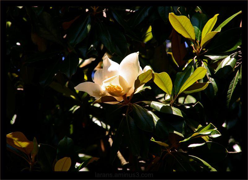...jardim botanico (3/5)