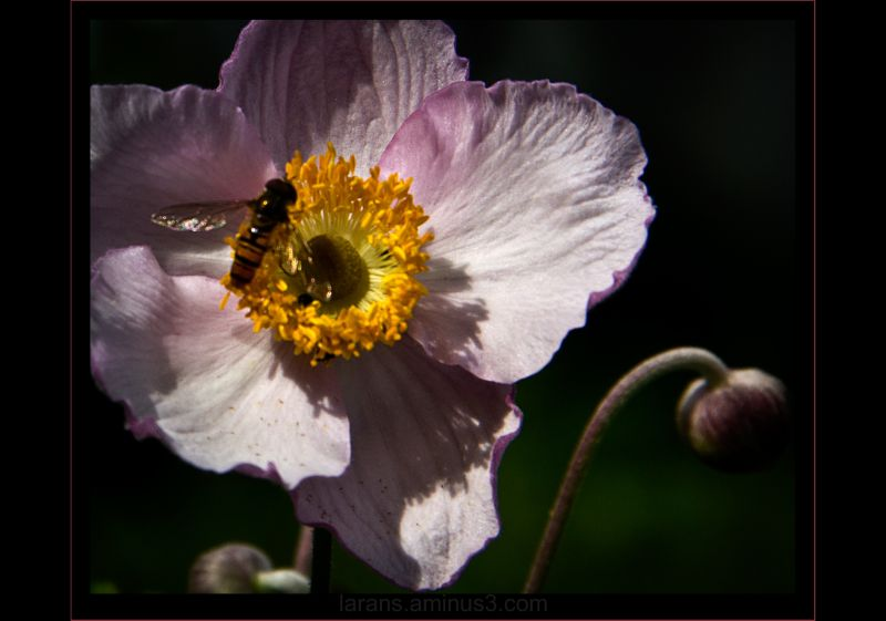 ...flower fly and flower...
