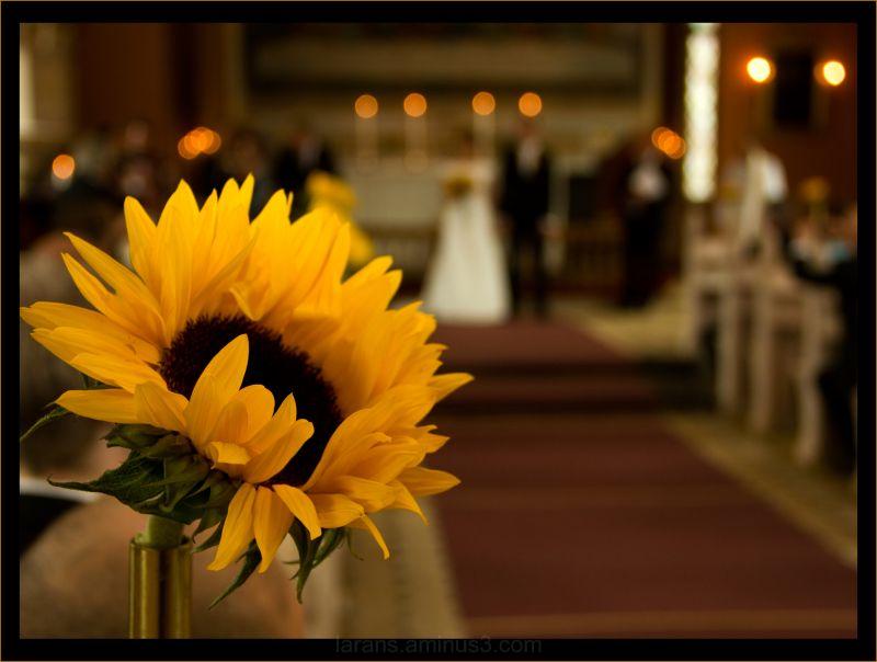 ...wedding (I)...