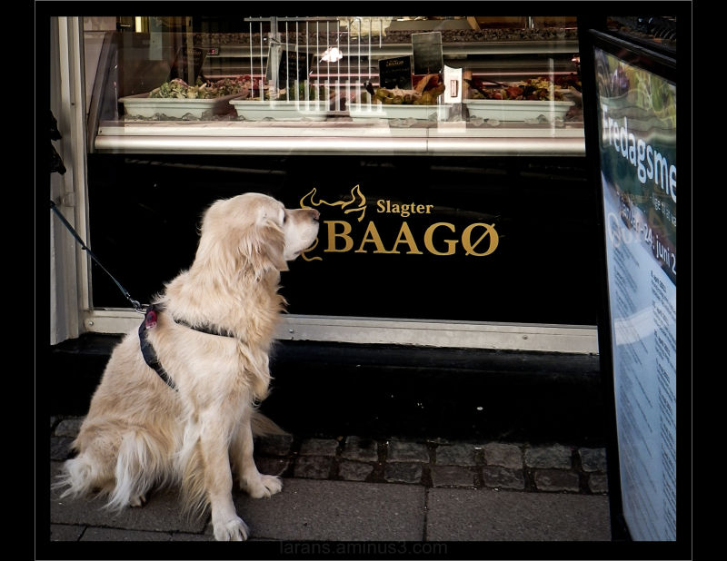 ...dog at the butcher´s...