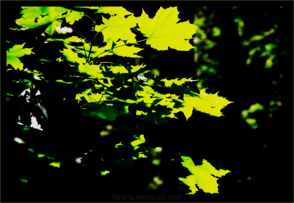 ...leaves...