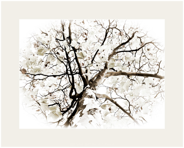 ...tree...