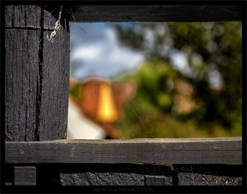 ...through the old fence...