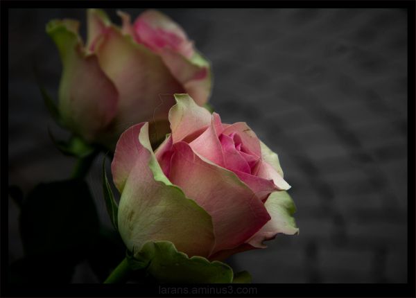 ...Pink Flower...