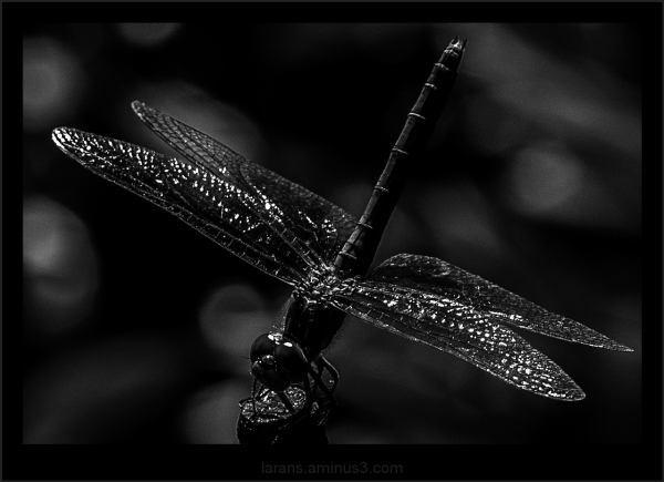 ...dragonfly...