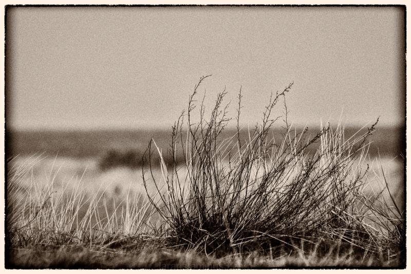 ...winter shore (I)...