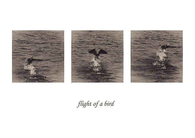 ...flight of a bird...