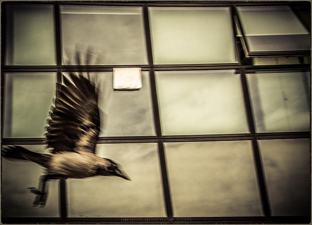 ...the crow´s flight...