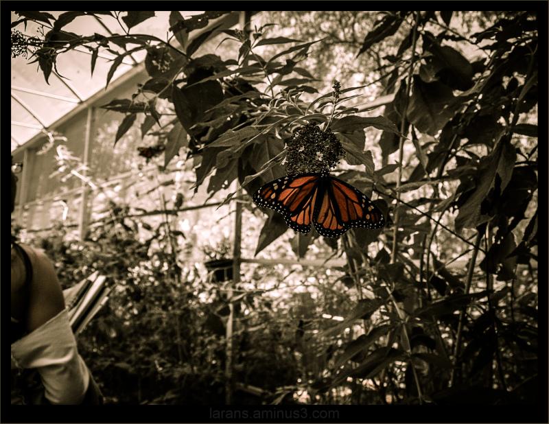 ...Jardim Botanico...
