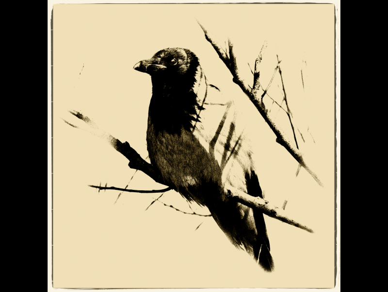 ...the crow...