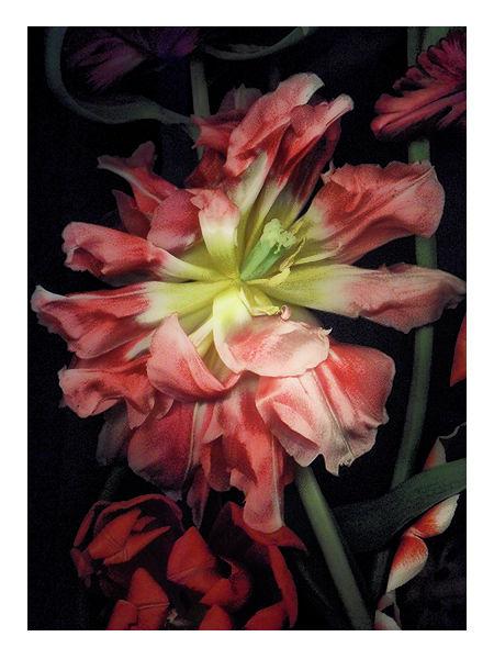 Flower - Art