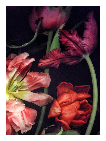 Flowers - Art
