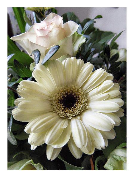 Bouquet - Combi