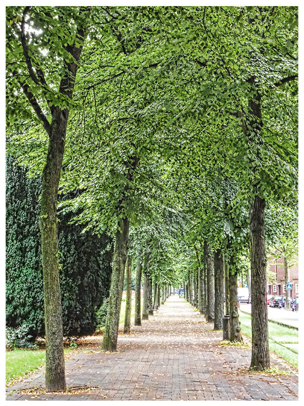 Trees On Both Sides
