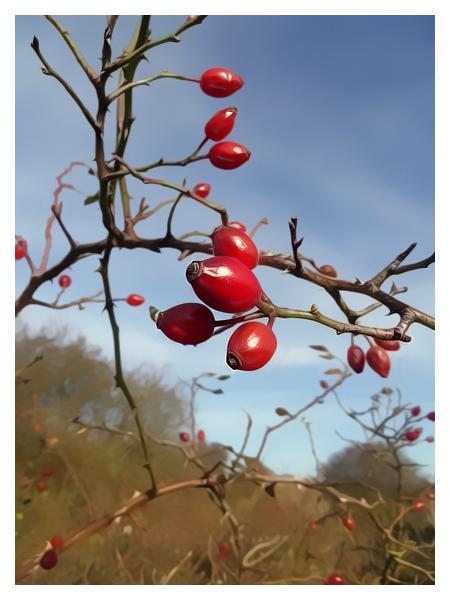 Winter 'Fruits'...
