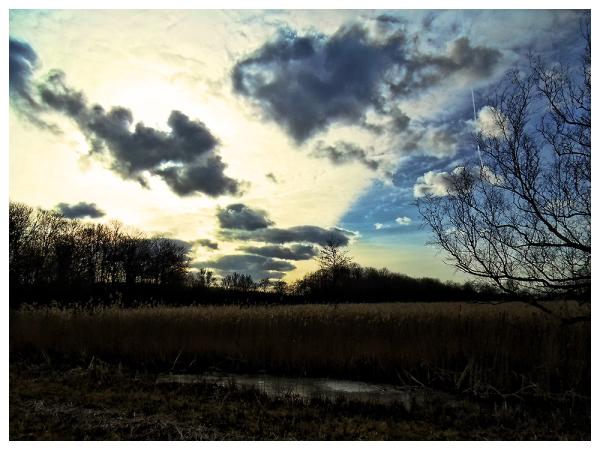 Skies...