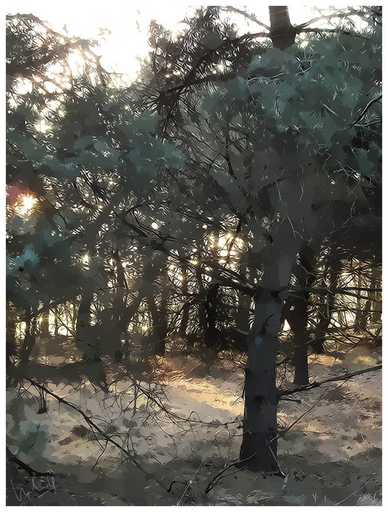 Sunlight in the Woods