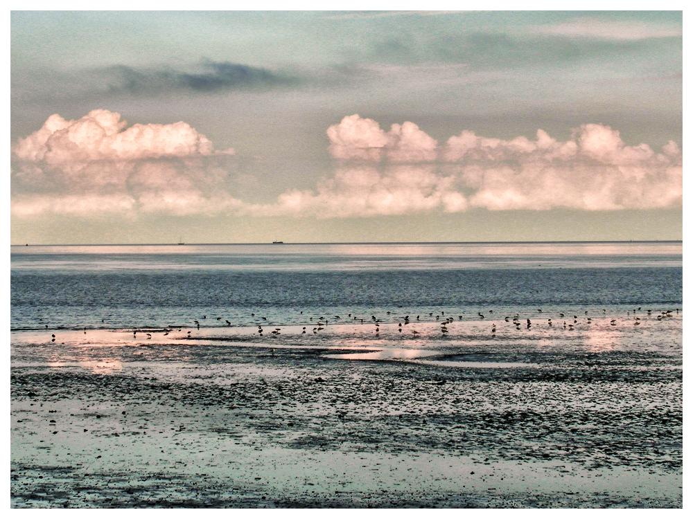 Waddenzee, Texel