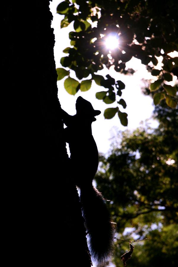 squirrel climbing a tree in toronto