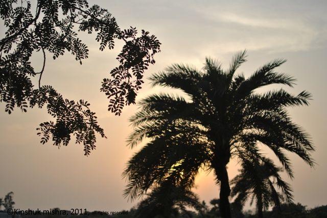 Evening at my village - II