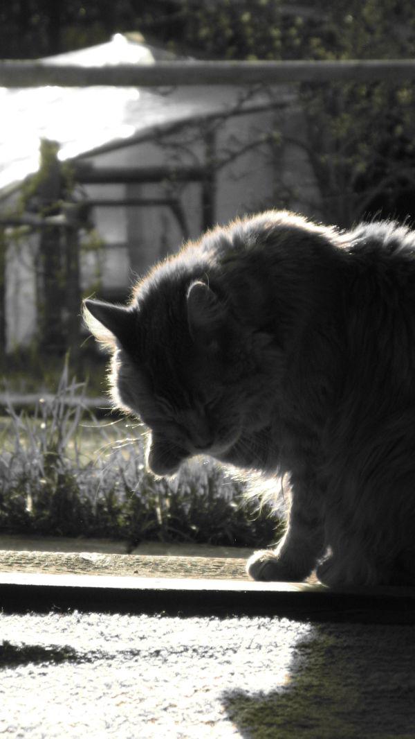 cat....
