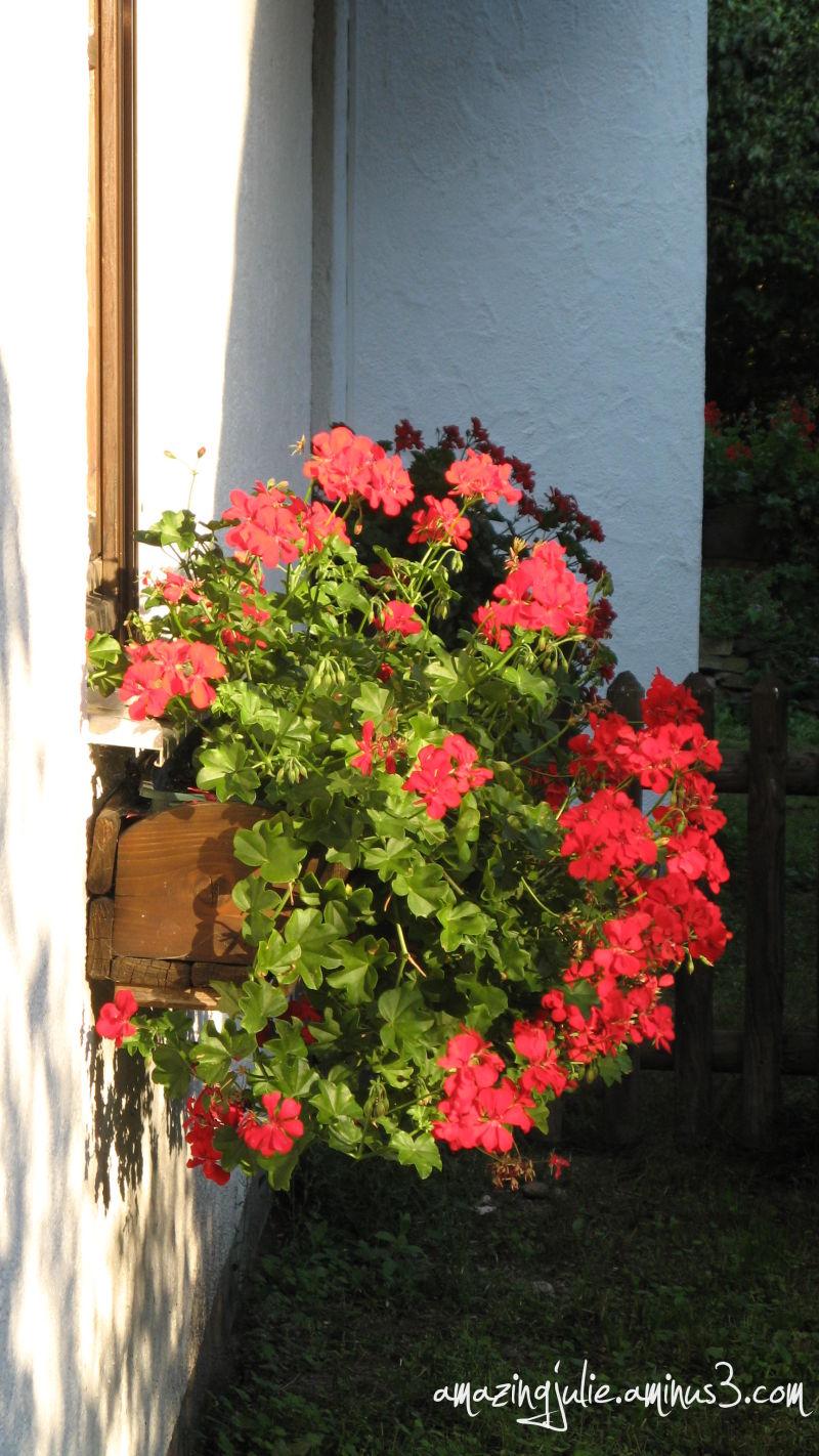 blooming window