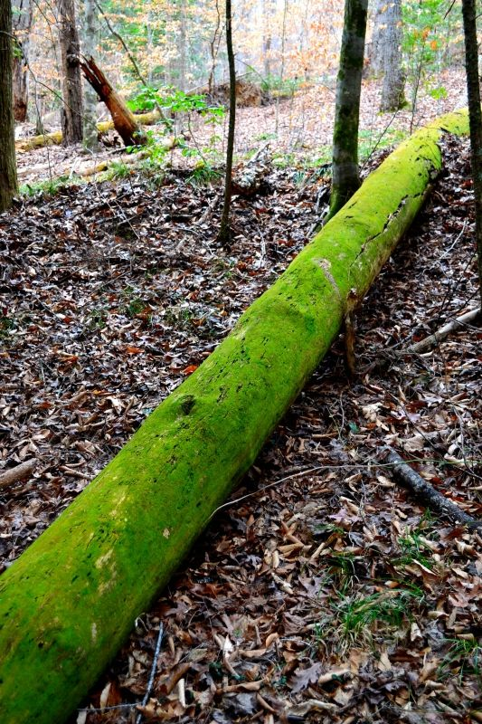 A log in the woods