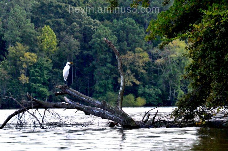 A bird perched on a log