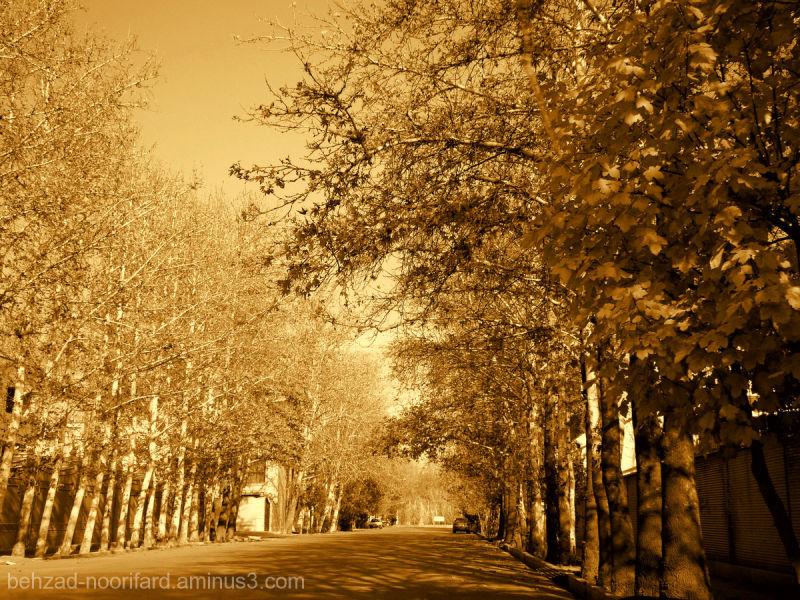 FallIn Shiraz