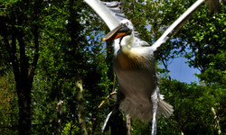 Beautiful and exotic bird.