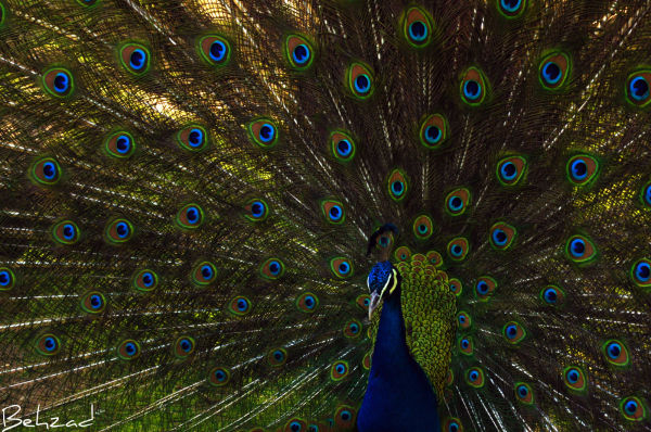 Beautiful and exotic birds