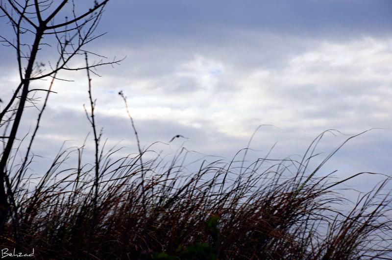 Alone Bird