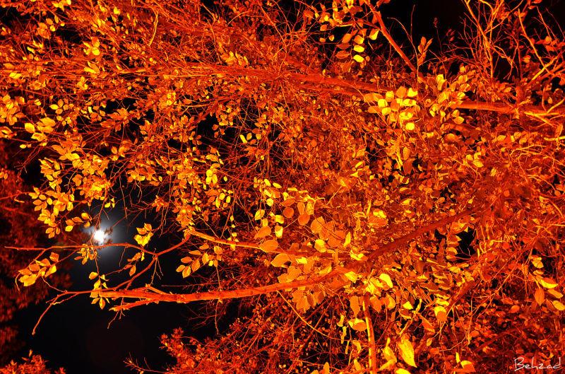 Fall Of Shiraz