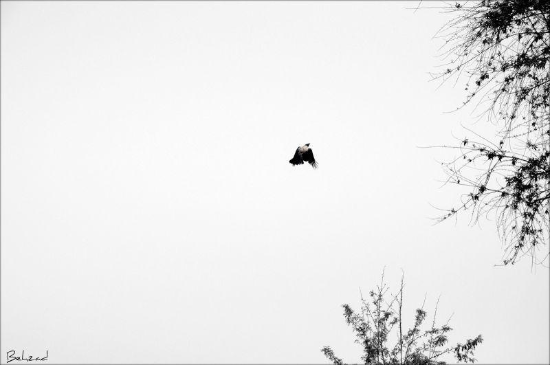 Fly towards Eternity