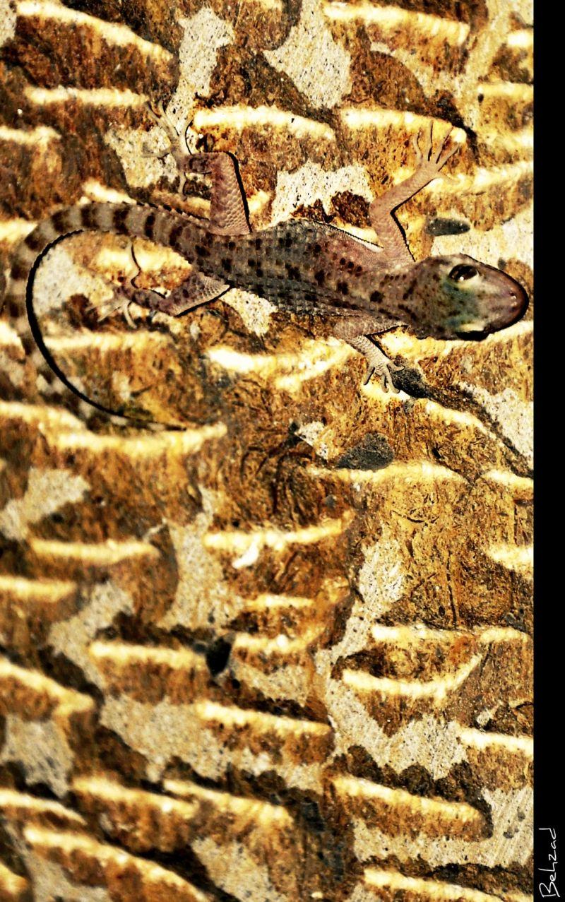 مارمولک Lizard