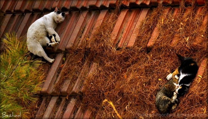 passionate sleep on the roof