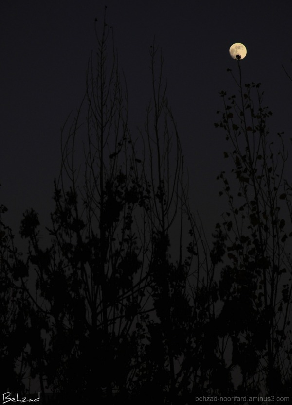 Autumn With Sweet Moon