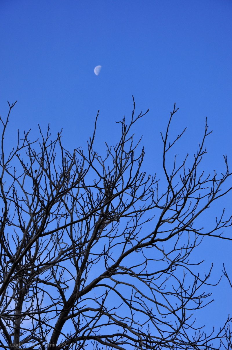 Hide And Seek With Moon