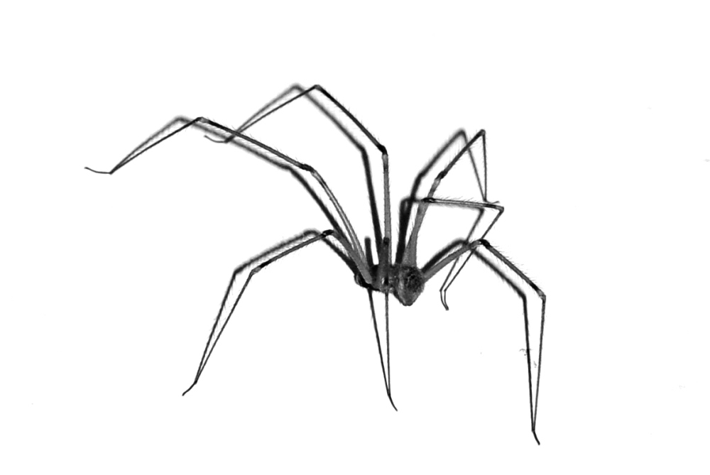 Tiny Spider :)