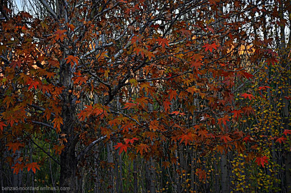 Amazing colors in autumn