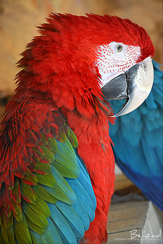 Beautiful and exotic birds.
